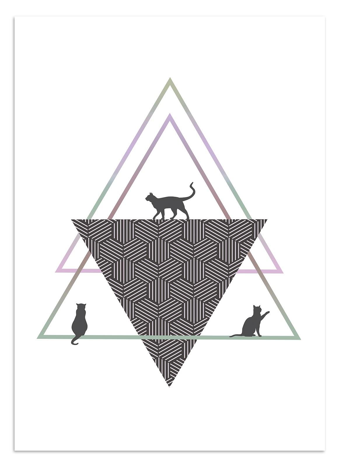 Plakat Koty